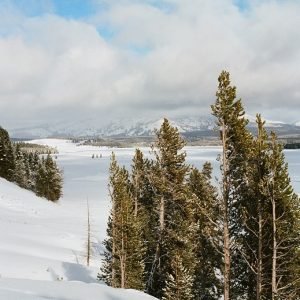 Hayden Valley Winter Photo by Hobie Hare 2020