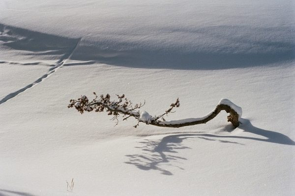 Resilience Photo by Hobie Hare 2020